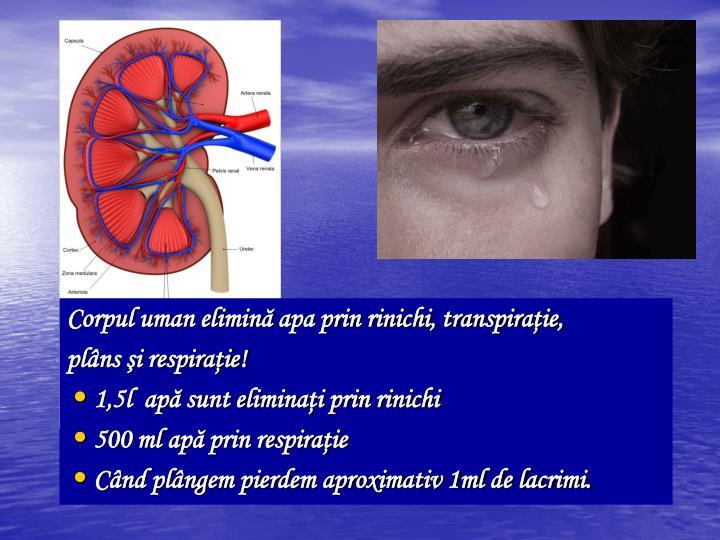 Corpul uman elimin apa prin rinichi, transpiraie,