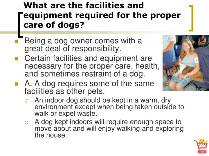 What are the facilities and equipment required for the proper care of dogs?