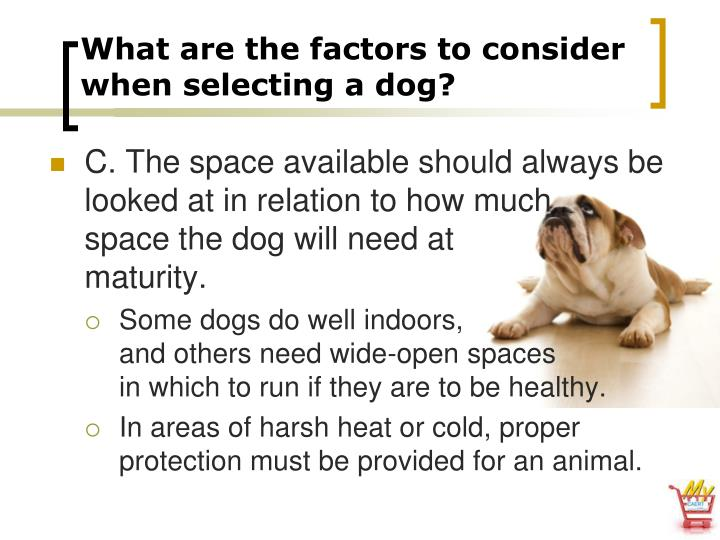 What are the factors to consider when selecting a dog?