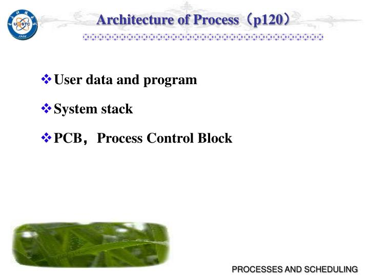 Architecture of Process