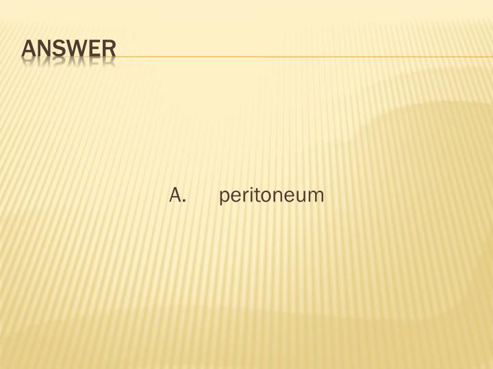 A.peritoneum