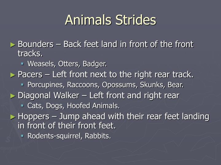 Animals Strides
