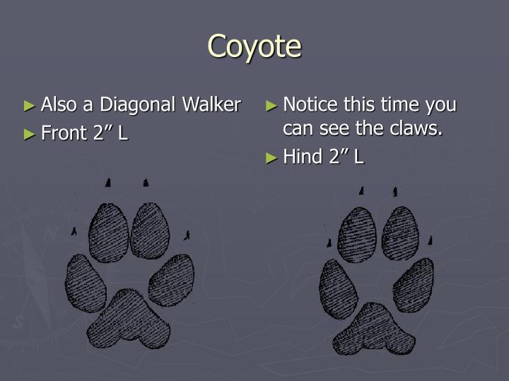 Also a Diagonal Walker