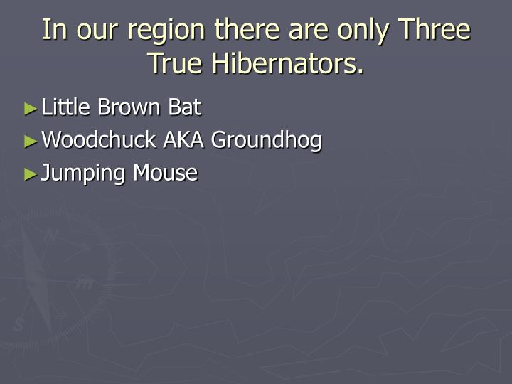 In our region there are only Three True Hibernators.