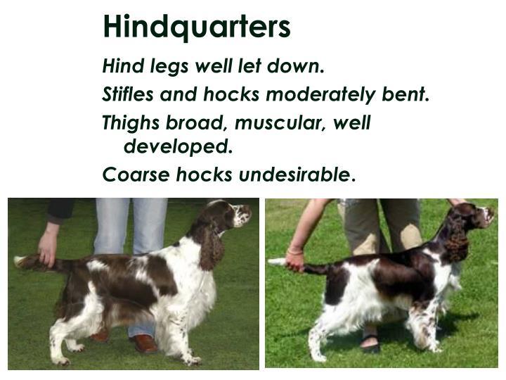 Hindquarters