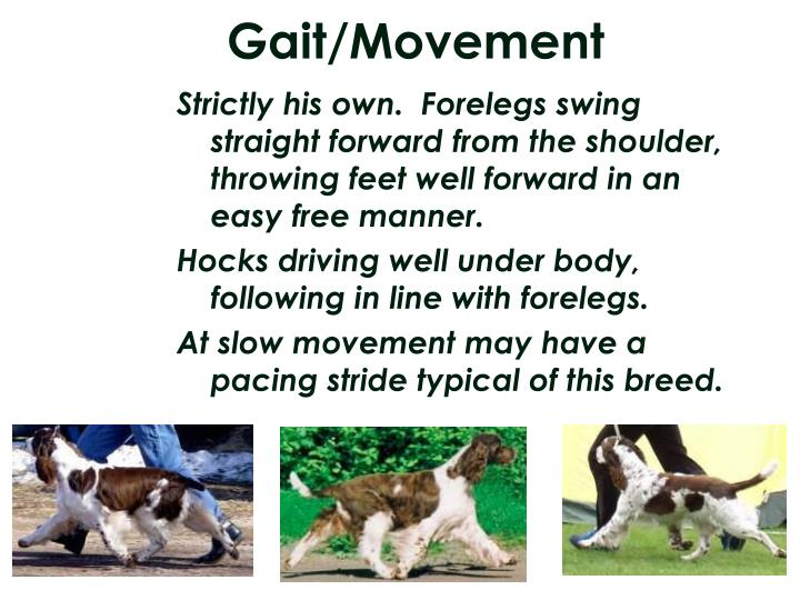 Gait/Movement