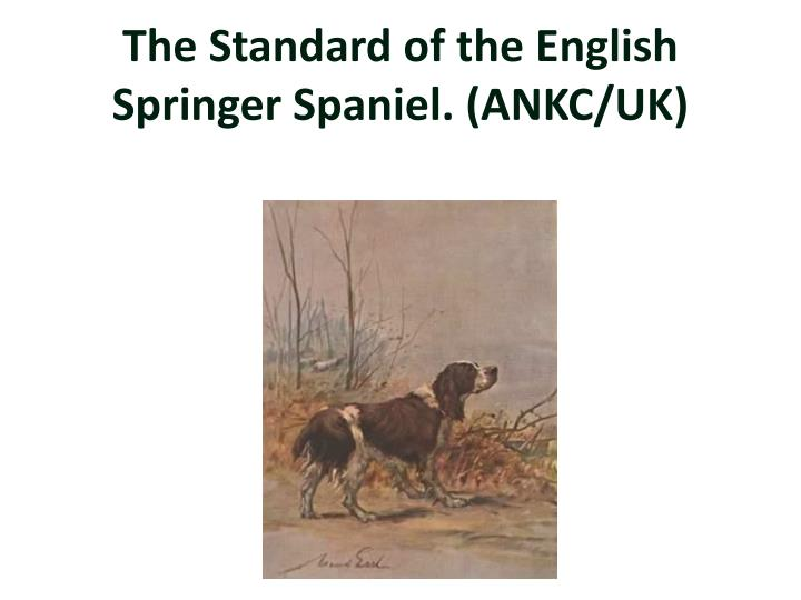 The standard of the english springer spaniel ankc uk