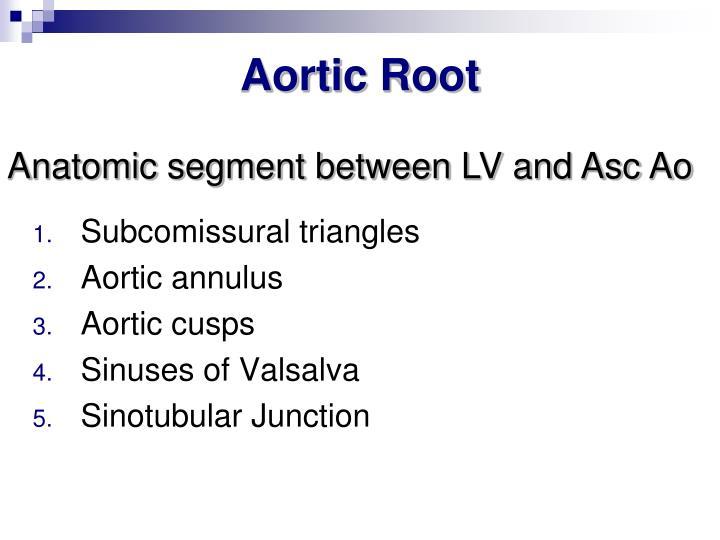 Aortic Root