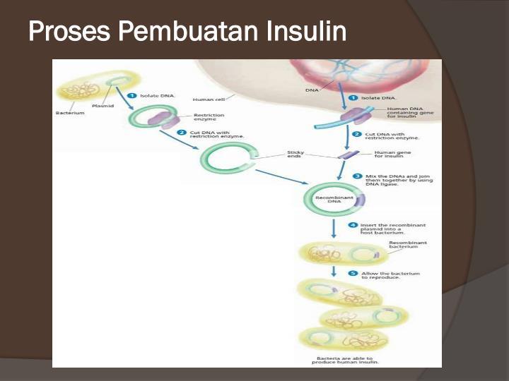 Proses Pembuatan Insulin