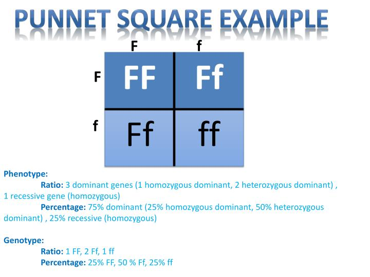 Punnet Square Example