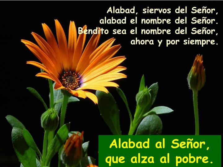 Alabad, siervos del Señor,
