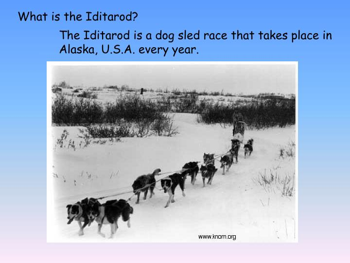 What is the Iditarod?