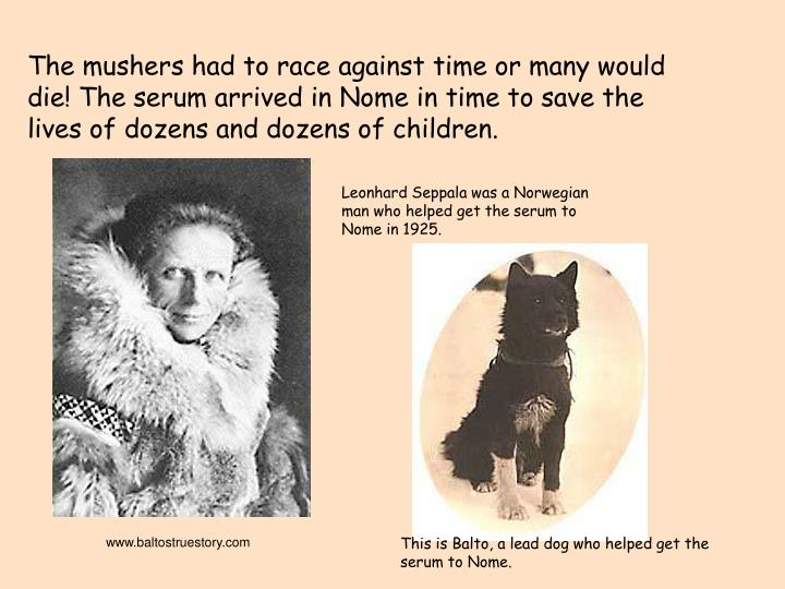 The mushers had to race against time or many would die! The serum arrived in Nome in time to save the lives of dozens and dozens of children.