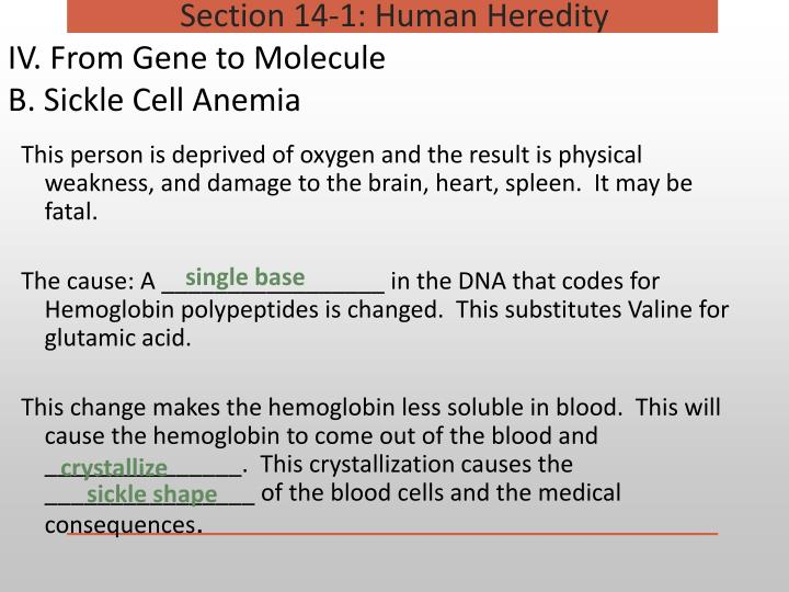 IV. From Gene to Molecule