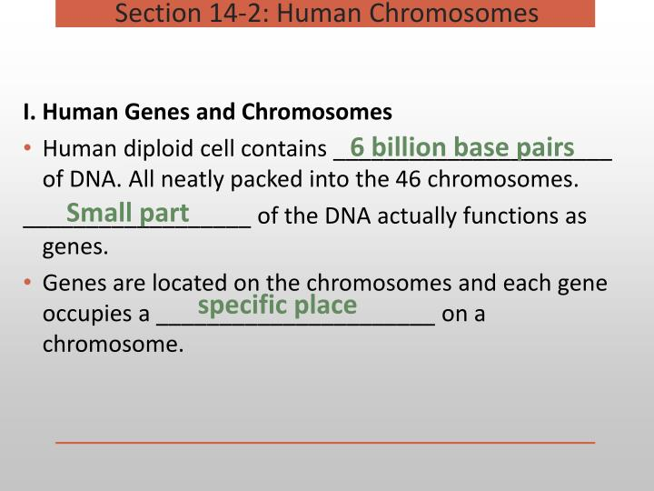 I. Human Genes and Chromosomes