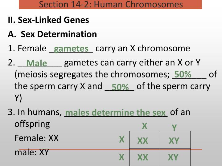 II. Sex-Linked Genes