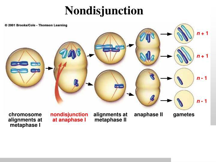 Nondisjunction
