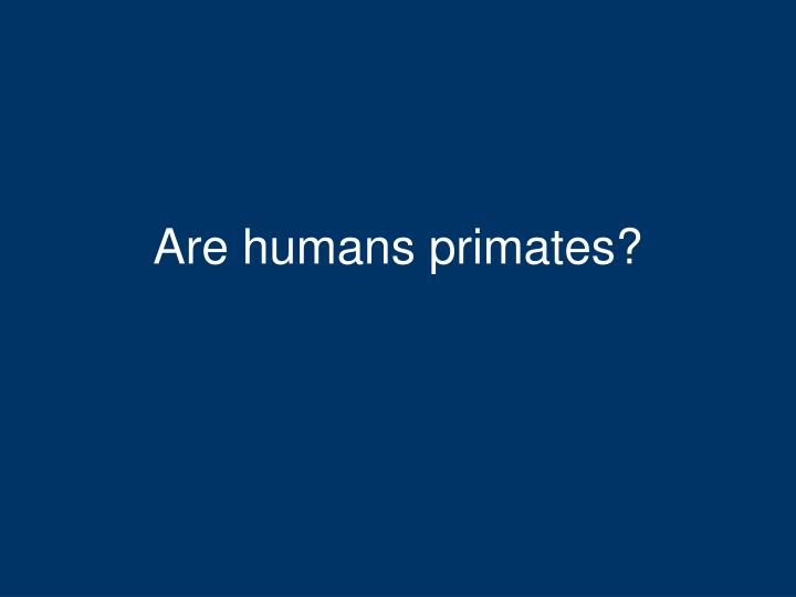 Are humans primates?