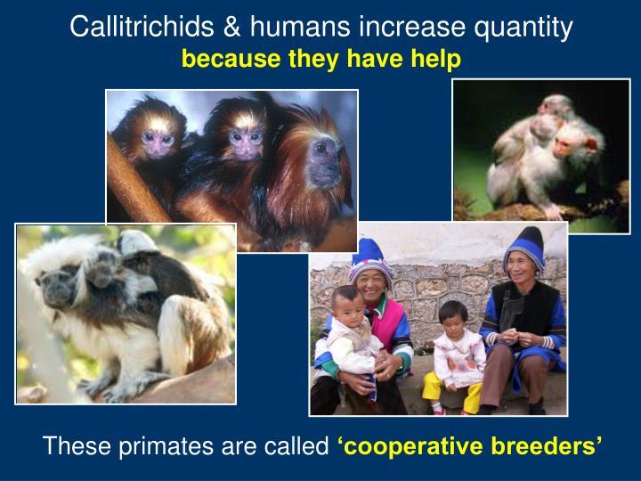 Callitrichids & humans increase quantity