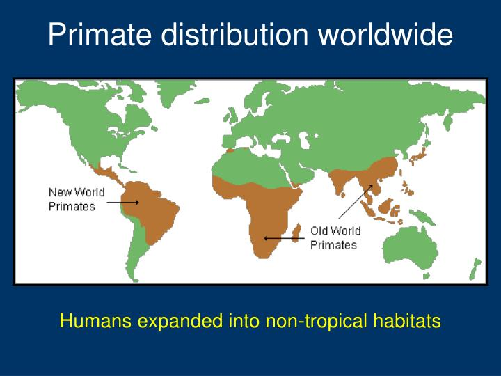 Primate distribution worldwide