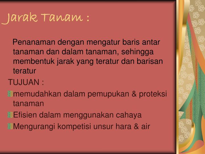 Jarak Tanam :