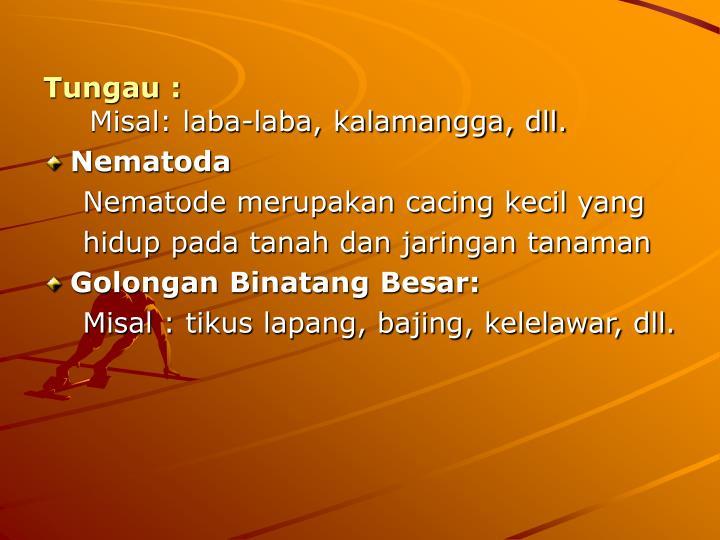Tungau :