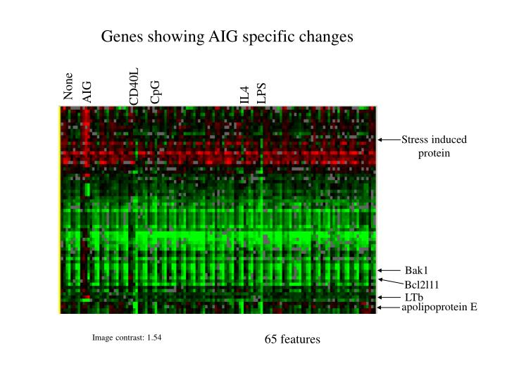 Genes showing AIG specific changes