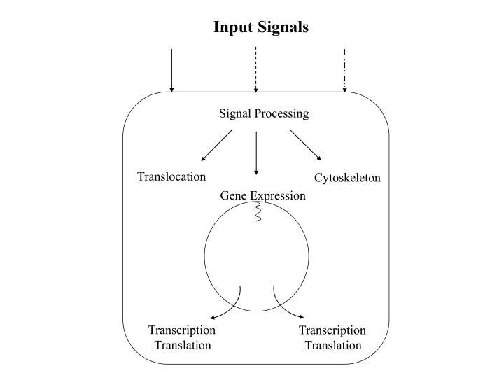 Input Signals