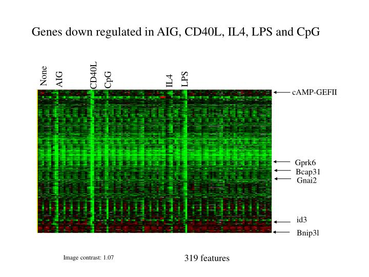 Genes down regulated in AIG, CD40L, IL4, LPS and CpG