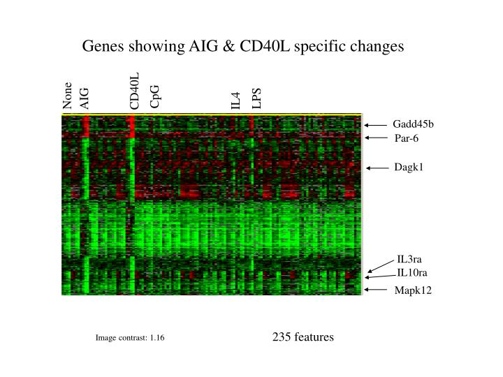 Genes showing AIG & CD40L specific changes