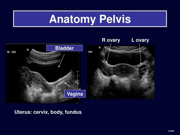 Anatomy Pelvis