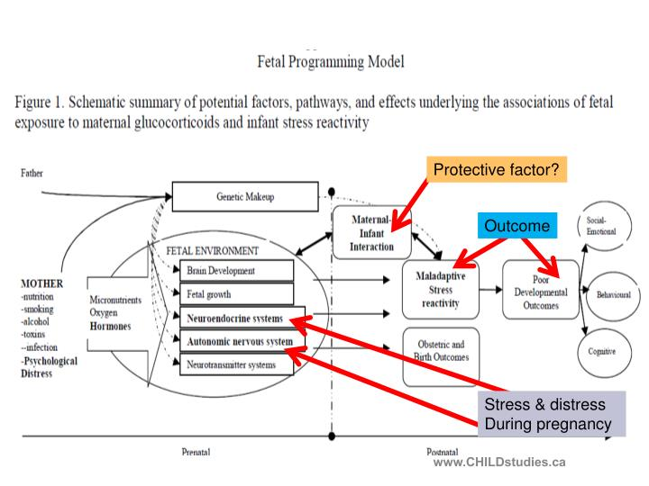 Protective factor?