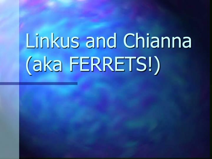 Linkus and chianna aka ferrets