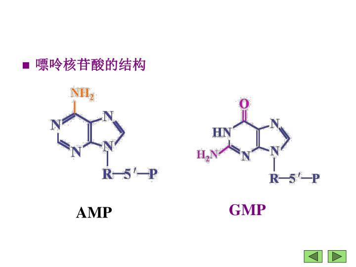 嘌呤核苷酸的结构