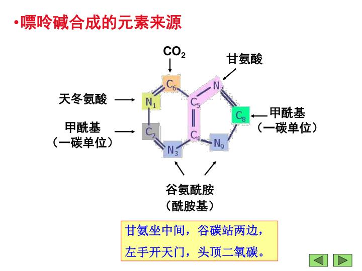 嘌呤碱合成的元素来源