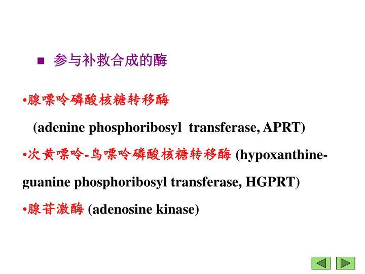 参与补救合成的酶