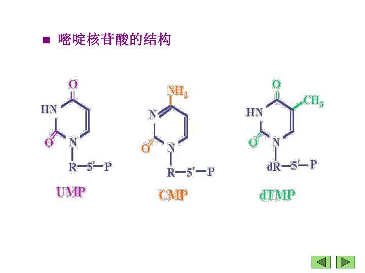 嘧啶核苷酸的结构