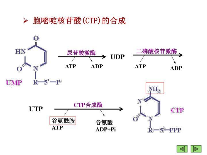 尿苷酸激酶
