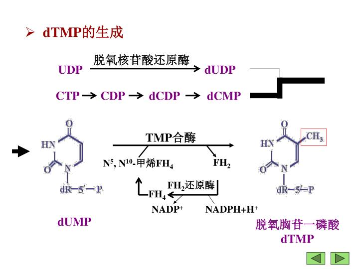脱氧核苷酸还原酶
