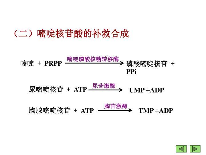 嘧啶磷酸核糖转移酶