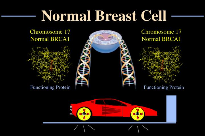 Normal Breast Cell