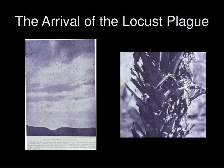 The Arrival of the Locust Plague