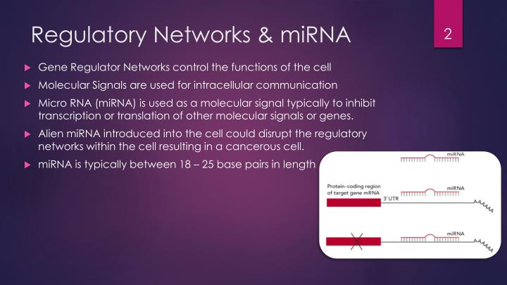 Regulatory networks mirna