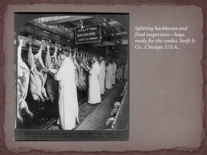 Splitting backbones and final inspection—hogs ready for the cooler, Swift & Co., Chicago, U.S.A..