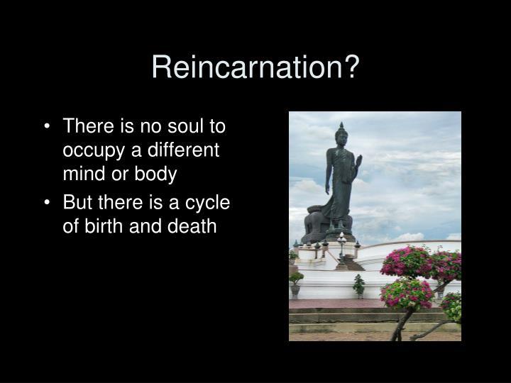 Reincarnation?