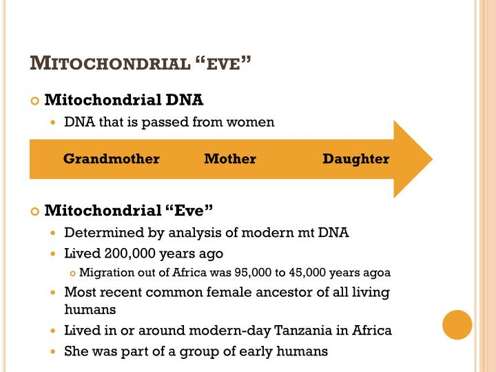 "Mitochondrial ""eve"""