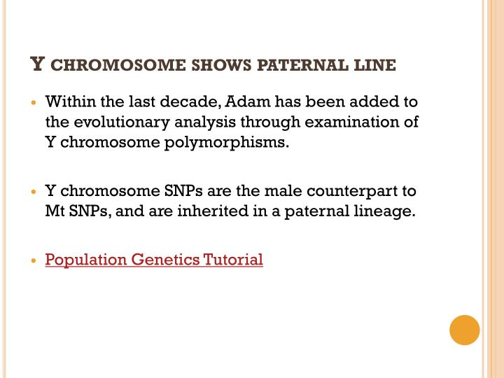 Y chromosome shows paternal line
