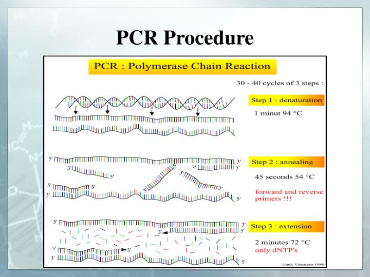 PCR Procedure