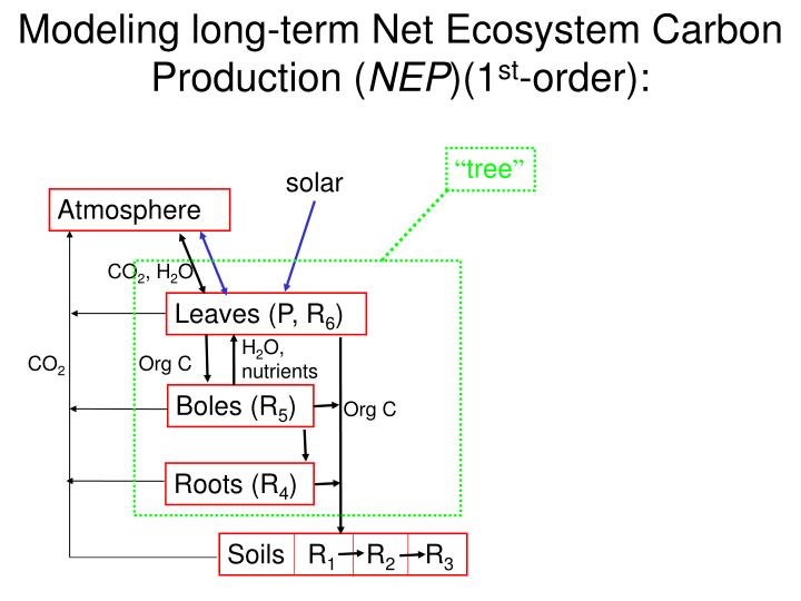 Modeling long-term Net Ecosystem Carbon Production (