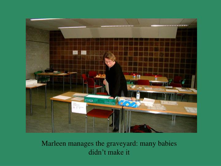 Marleen manages the graveyard: many babies